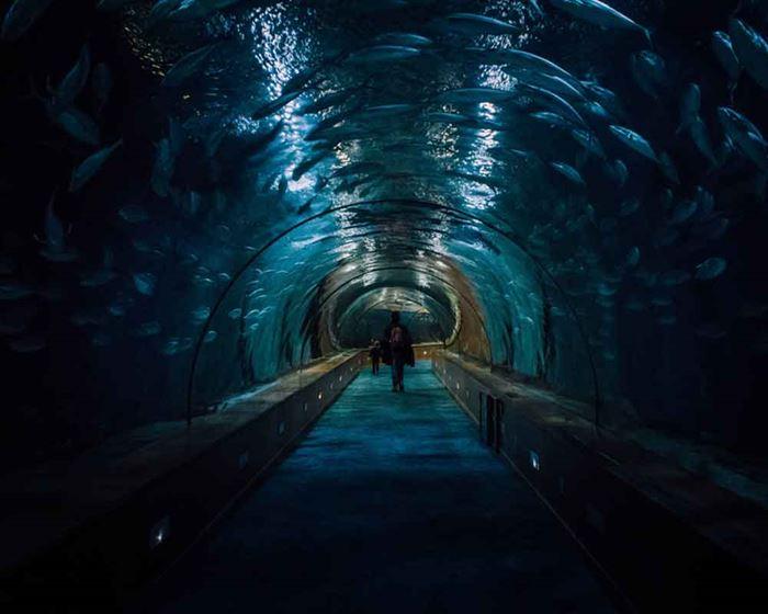 Túnel acuario