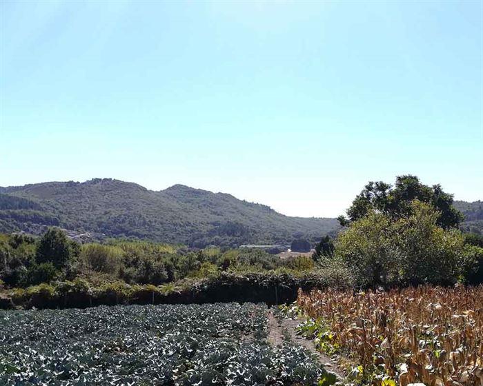 Cultivo maíz en Galicia