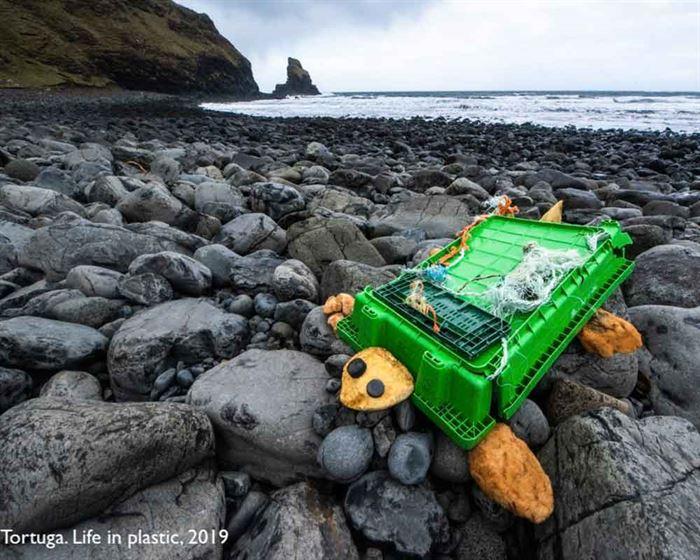Tortuga con residuos marinos