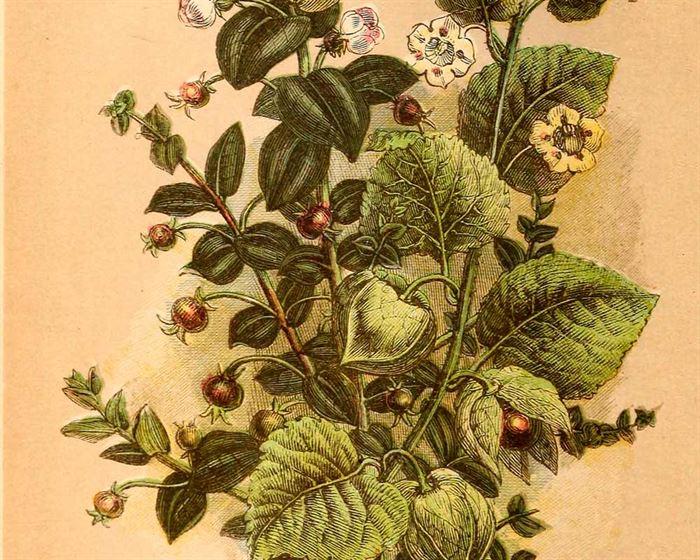 Cartel plantas