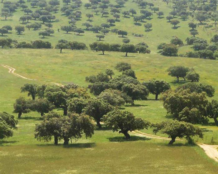 Encinar Badajoz